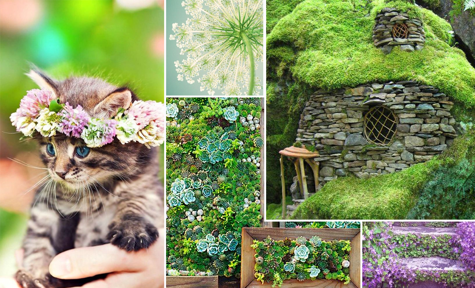 kitten ,  queen anne's lace ,  hobbit hole ,  succulent art ,  steps