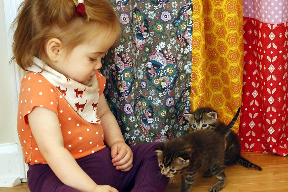Rora kittens sitting.jpg