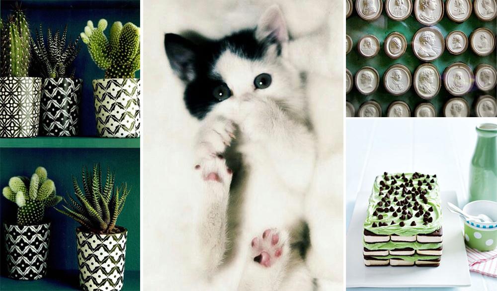 Cacti ,  kitten ,  cameos ,  mint dessert .