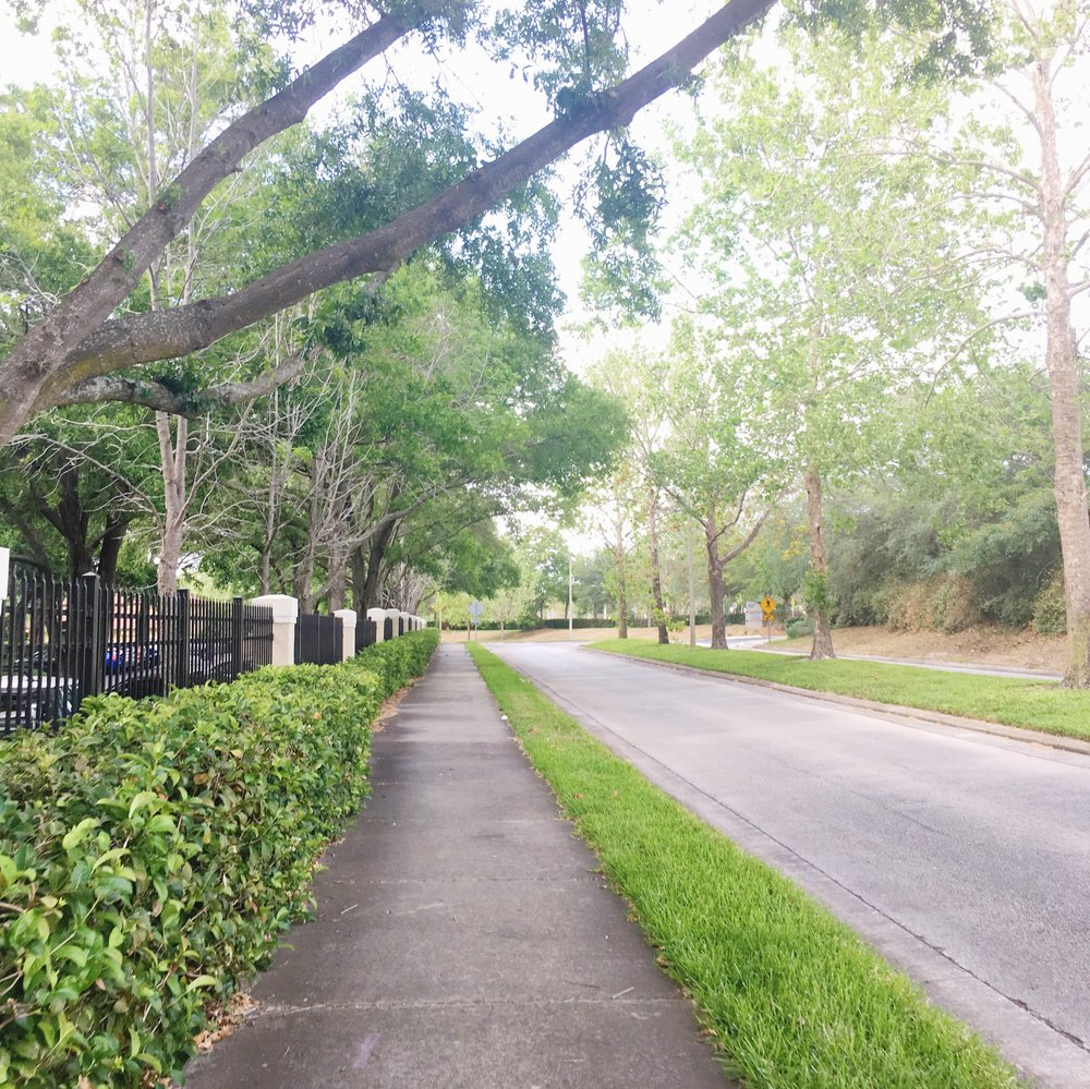 Road_greenery_altamonte_florida_scenary