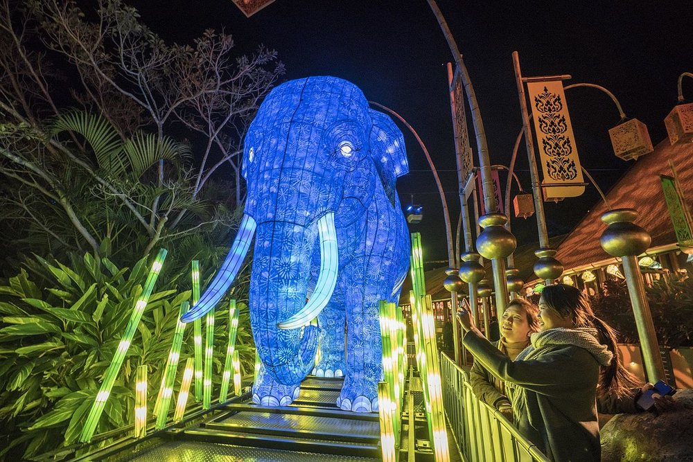 Vivid_Sydney_2016_Taronga_Zoo_AsianElephant_CREDIT_Destination_NSW_DK029_0 (1).jpg