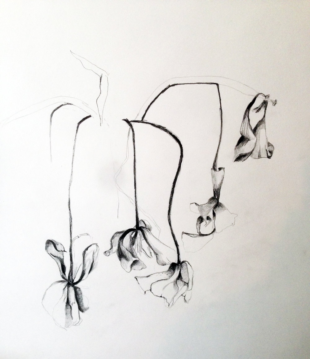 "Dead flowers, pencil on paper 24 x 18"", 2015."