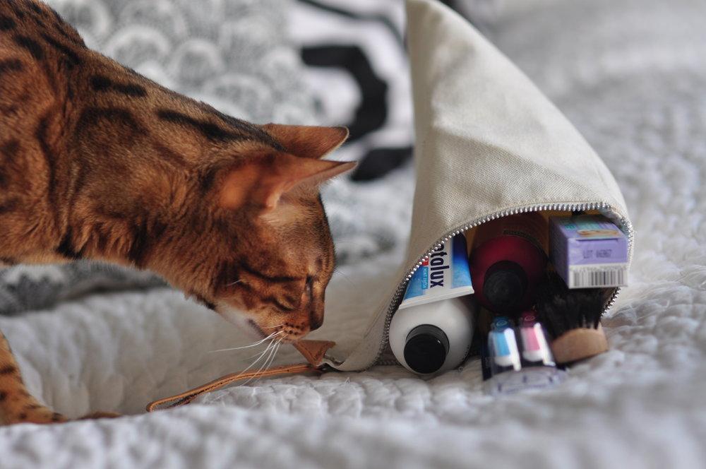 Kotibengalimme Simba oli erittäin kiinnostunut kosmetiikkalaukun sisällöstä