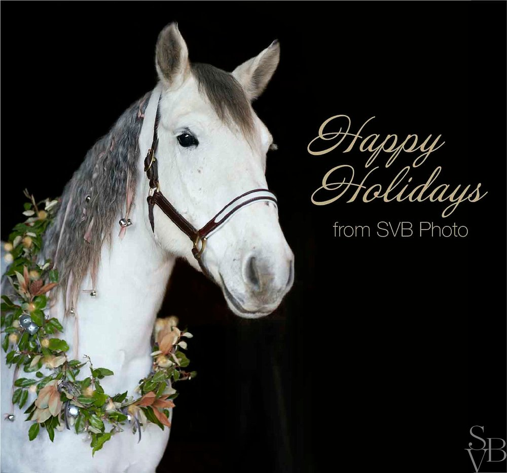 equine holiday photography