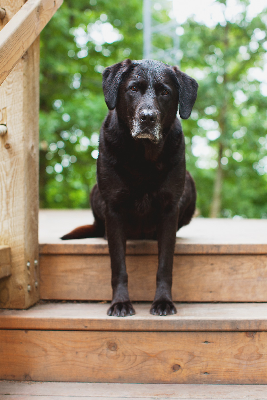 Stacey Van Berkel Photography I Black lab sitting on steps