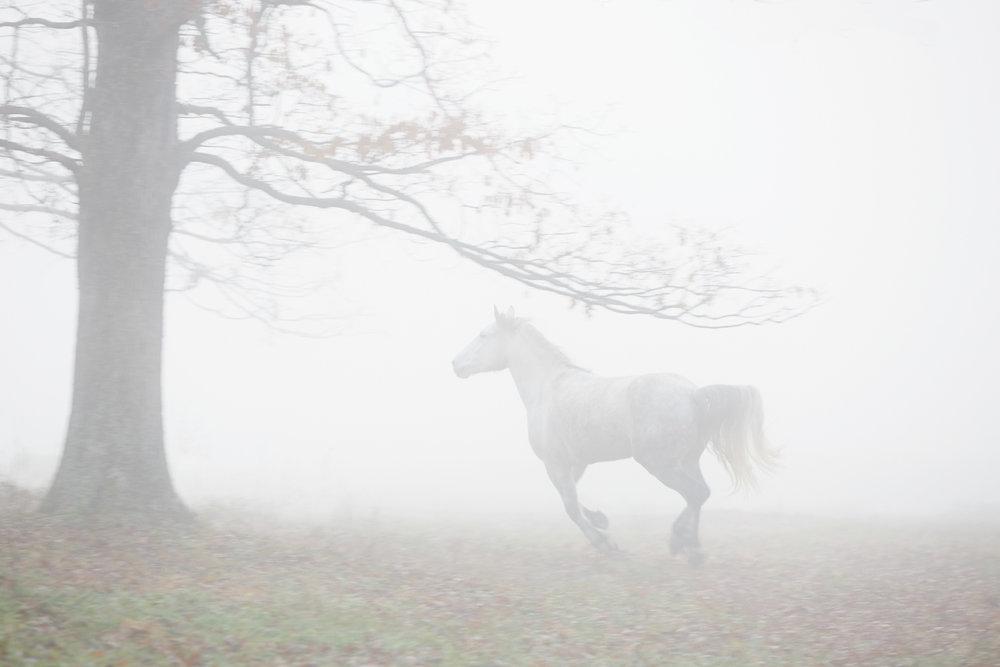 8_PER_2015_1213_brontë_fog_155f_WEB.jpg