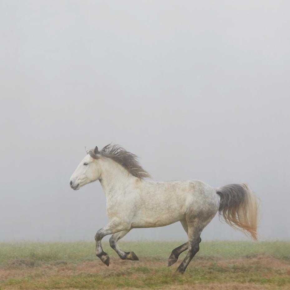 9_PER_2015_1213_brontë_fog_417f_sq_WEB.jpg