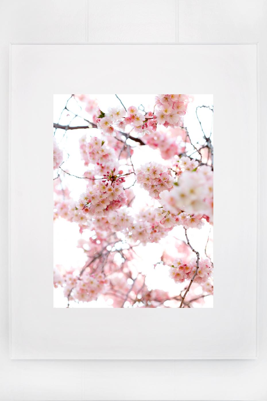 2_blossoms_I.jpg