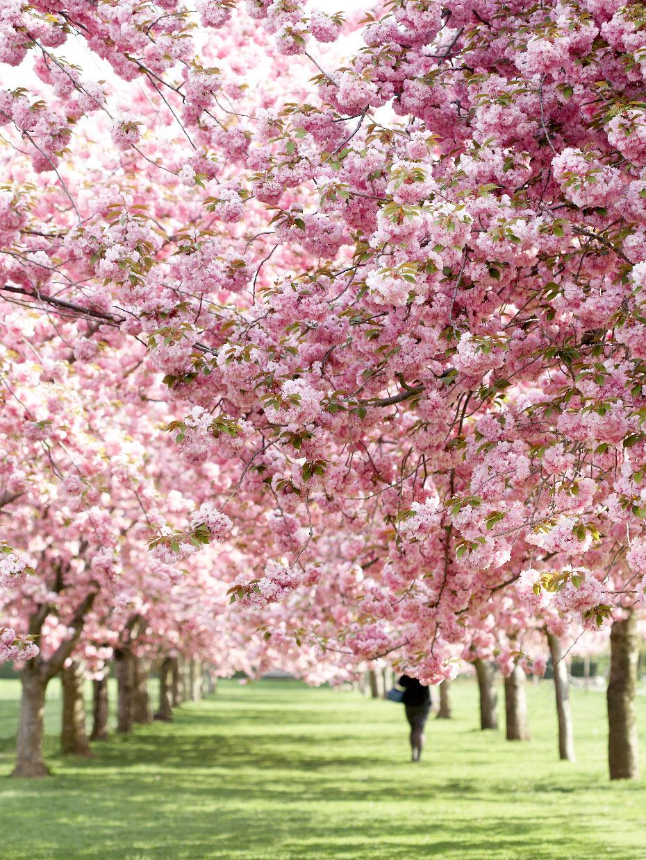 050108_CherryBlossoms_018f_WEB.jpg