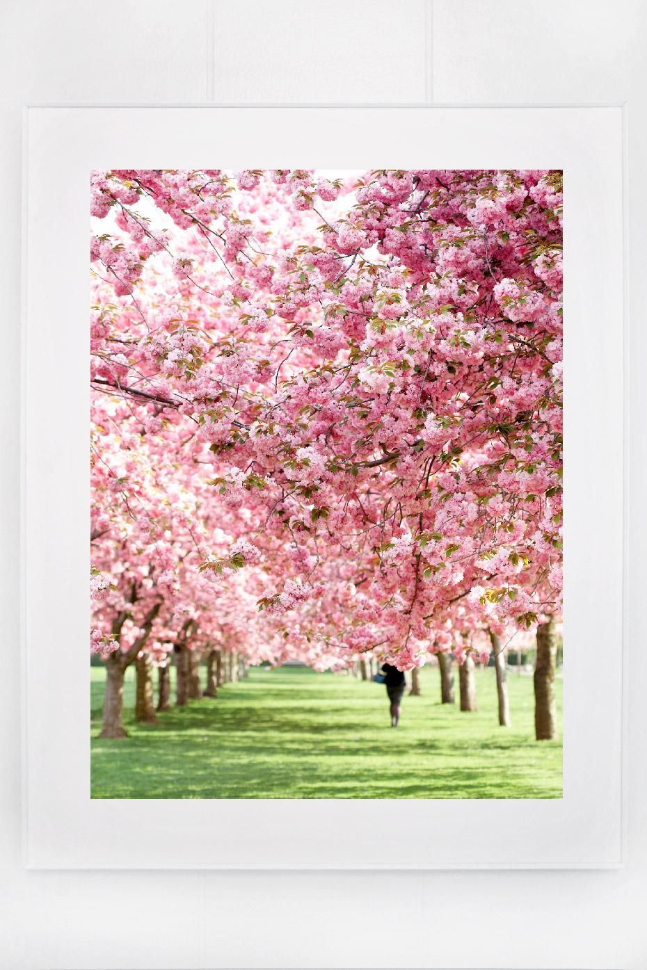 3_blossoms_I.jpg