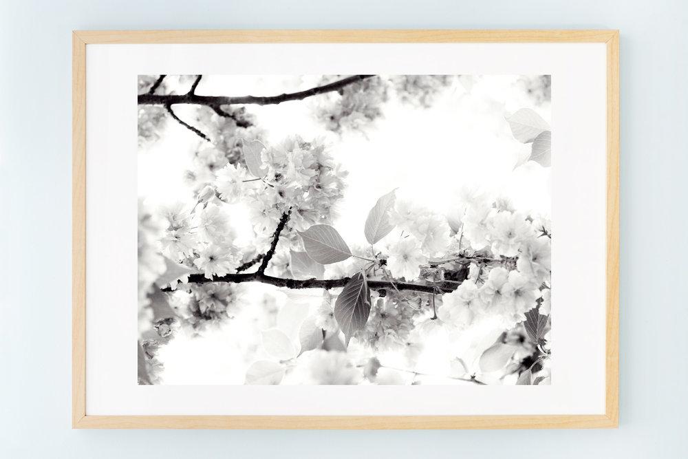4_blossoms_I.jpg