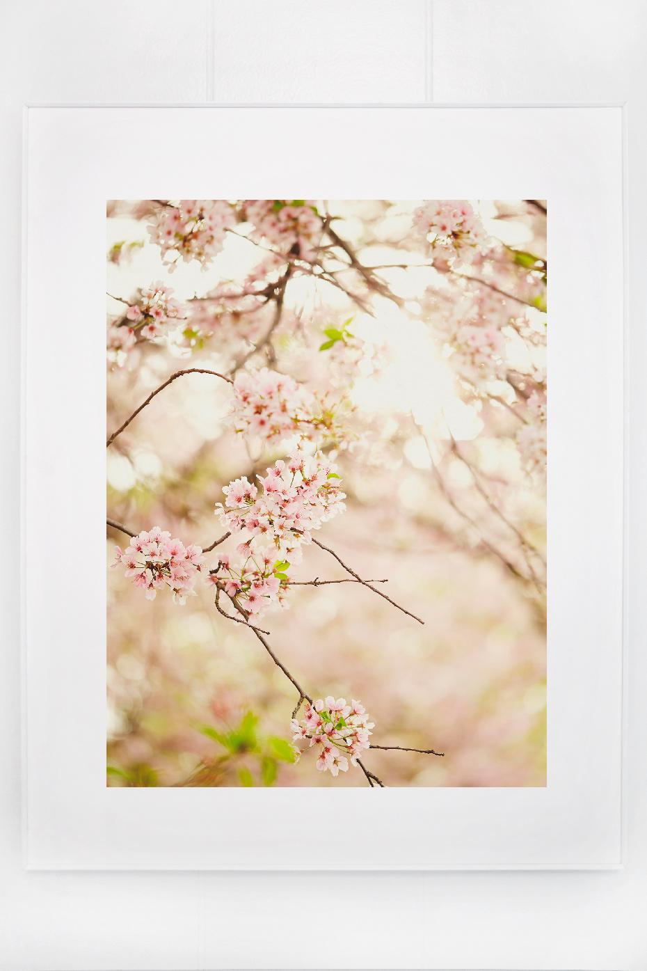 7_blossoms_I.jpg
