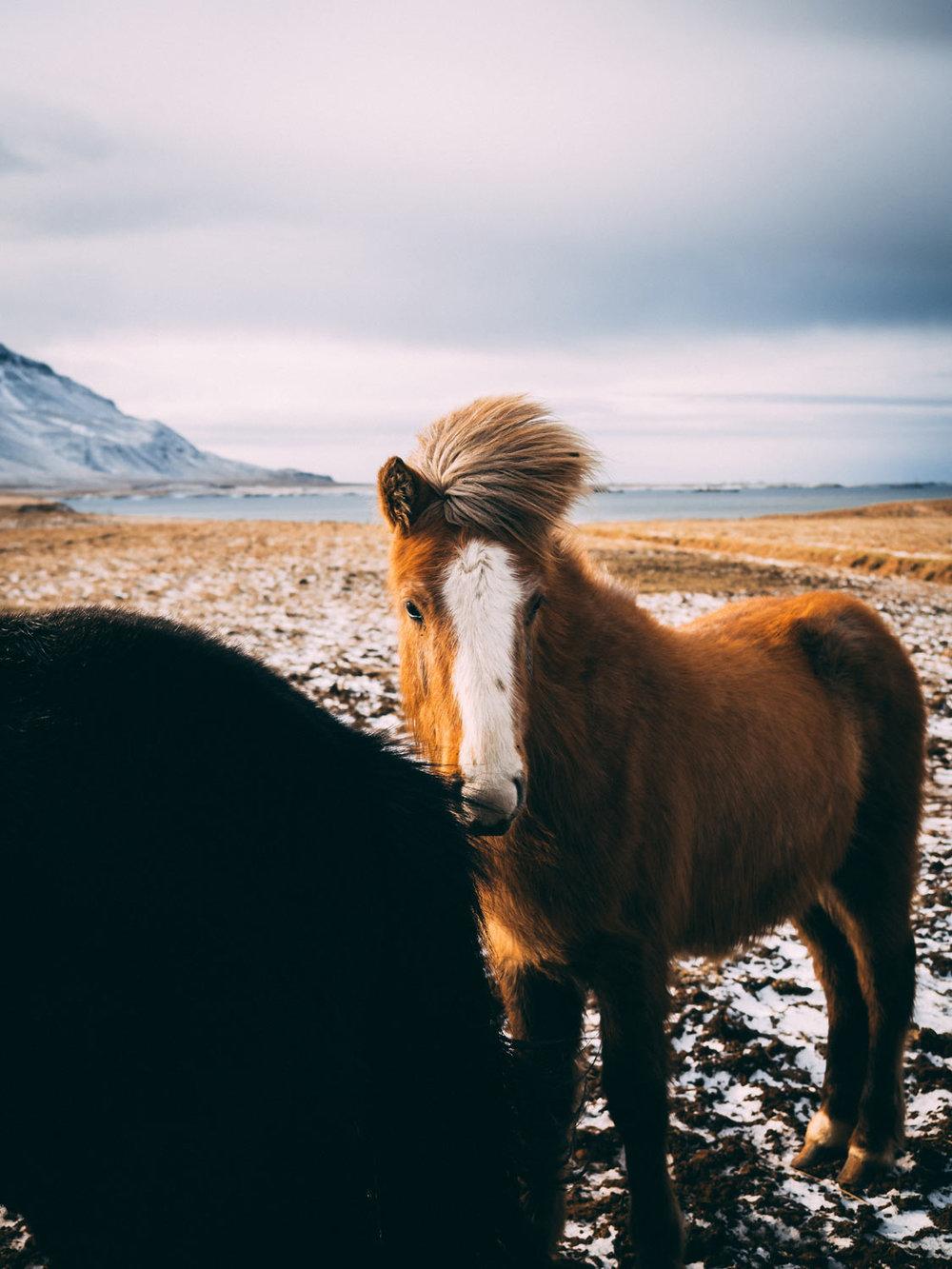 VanessaGarrett-Iceland-4.jpg