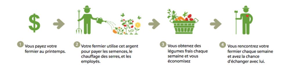 Qu'est-ce que c'est au juste? - La carte prépayée vous permet d'acheter chaque semaine, des légumes à votre fermier préféré!