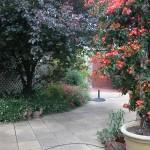 01-Garden-Nov-10-150x150