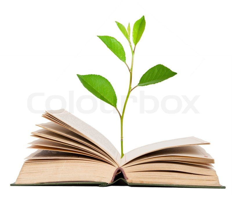 4771223-green-sprout-growing-from-open-book.jpg
