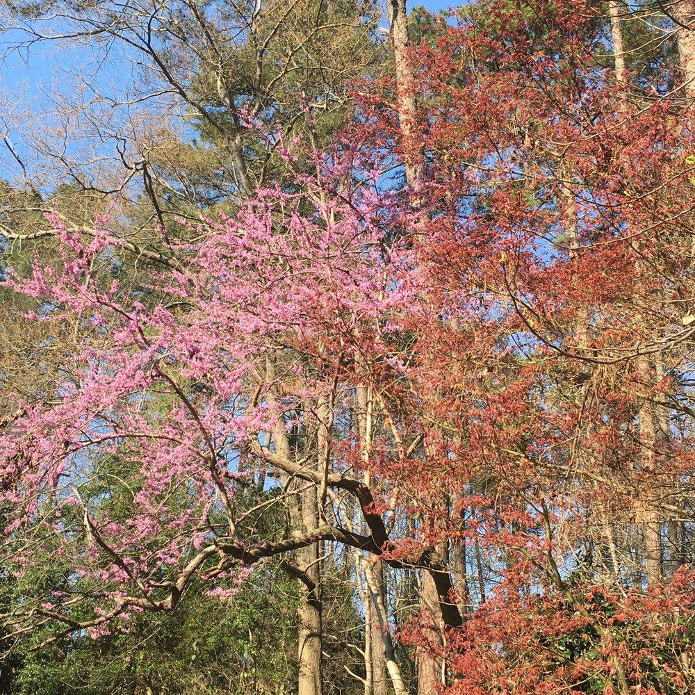 Joslin Garden — City of Oaks Foundation