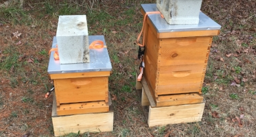 Bee hives supplement acres of natural habitat at Kellam-Wyatt Farm.