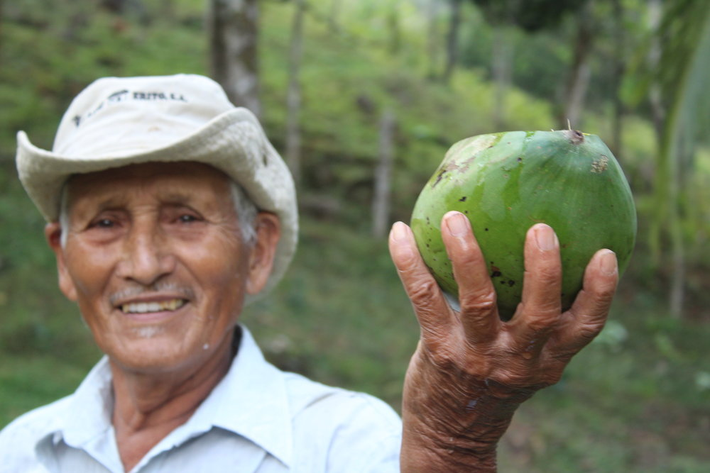 The property owner serving us cool coconut water.