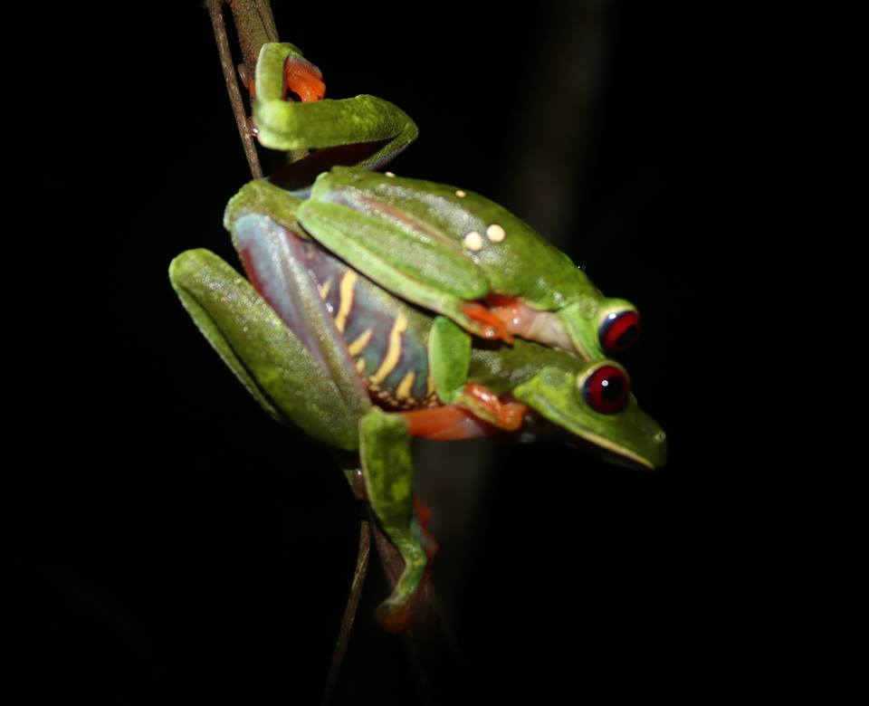 frog fuck night hike.jpg