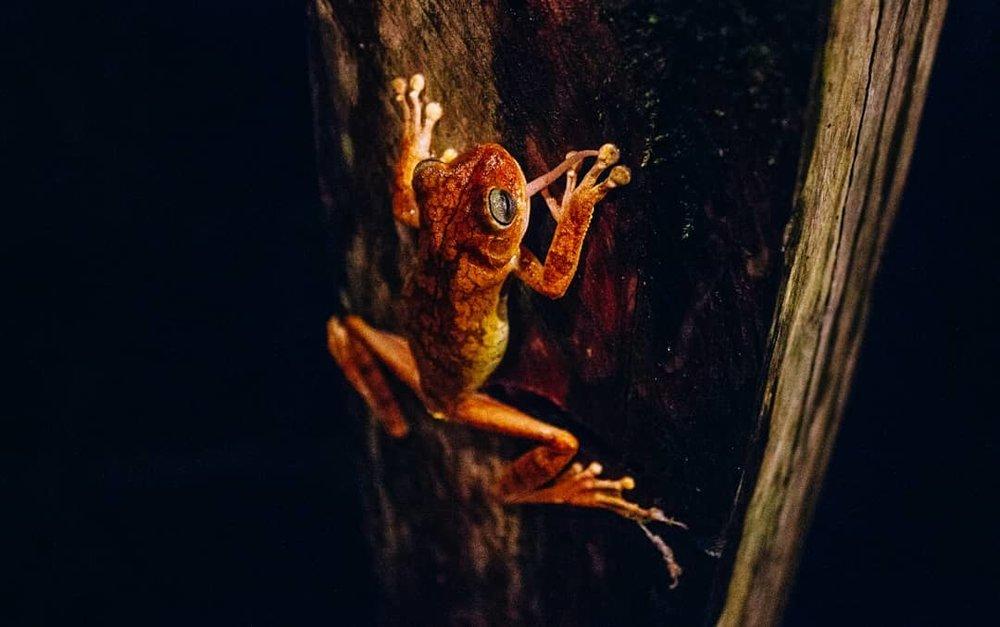 night hike crazy frog.jpg