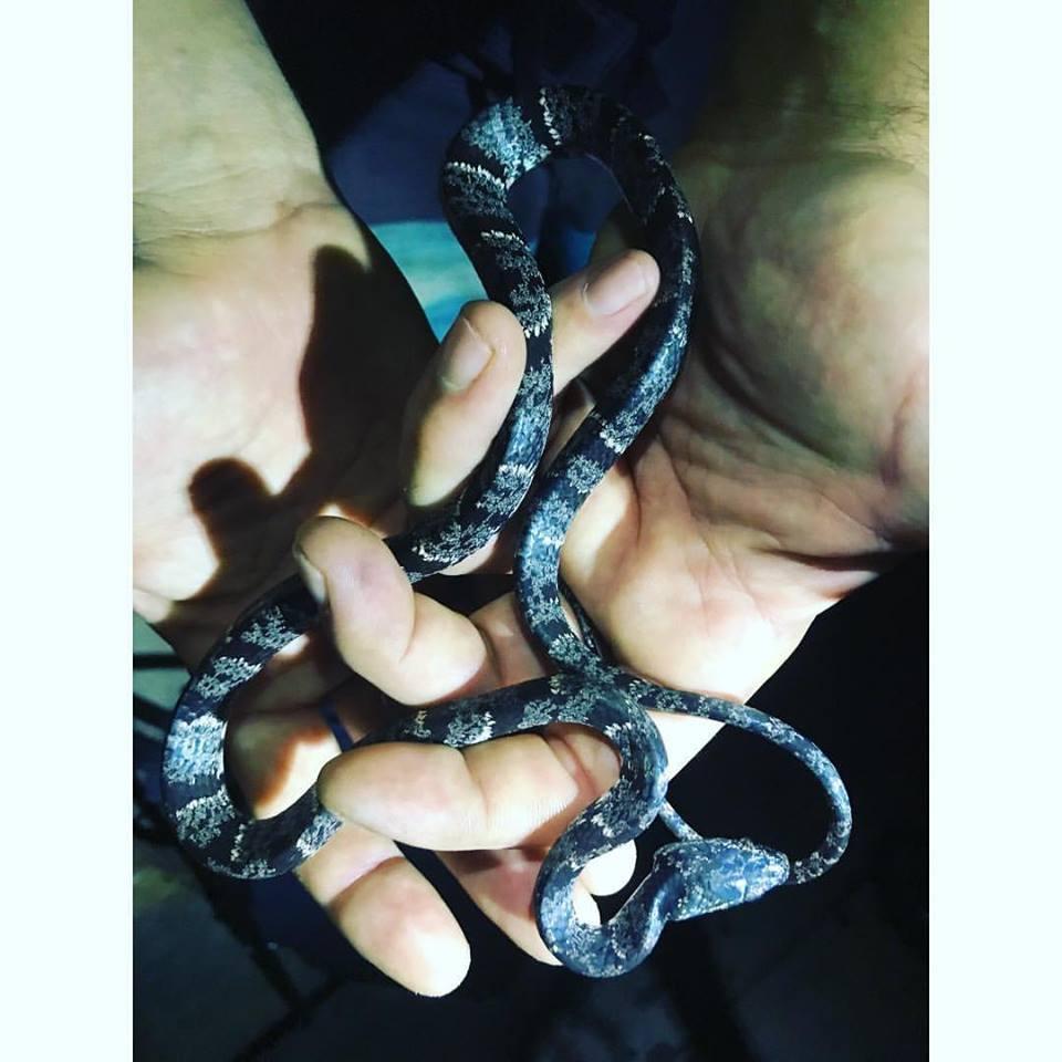 night hike snakey.jpg