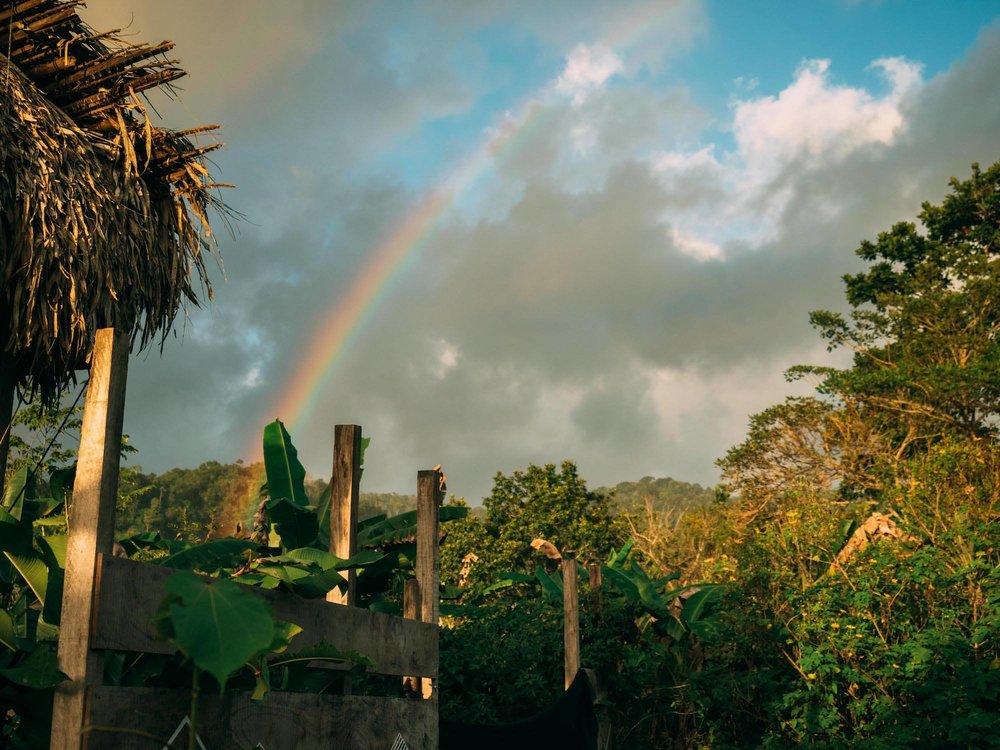 rainbow jungle.jpg