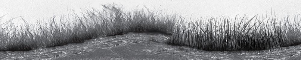 glycocalyxvandeberg-02_1.png