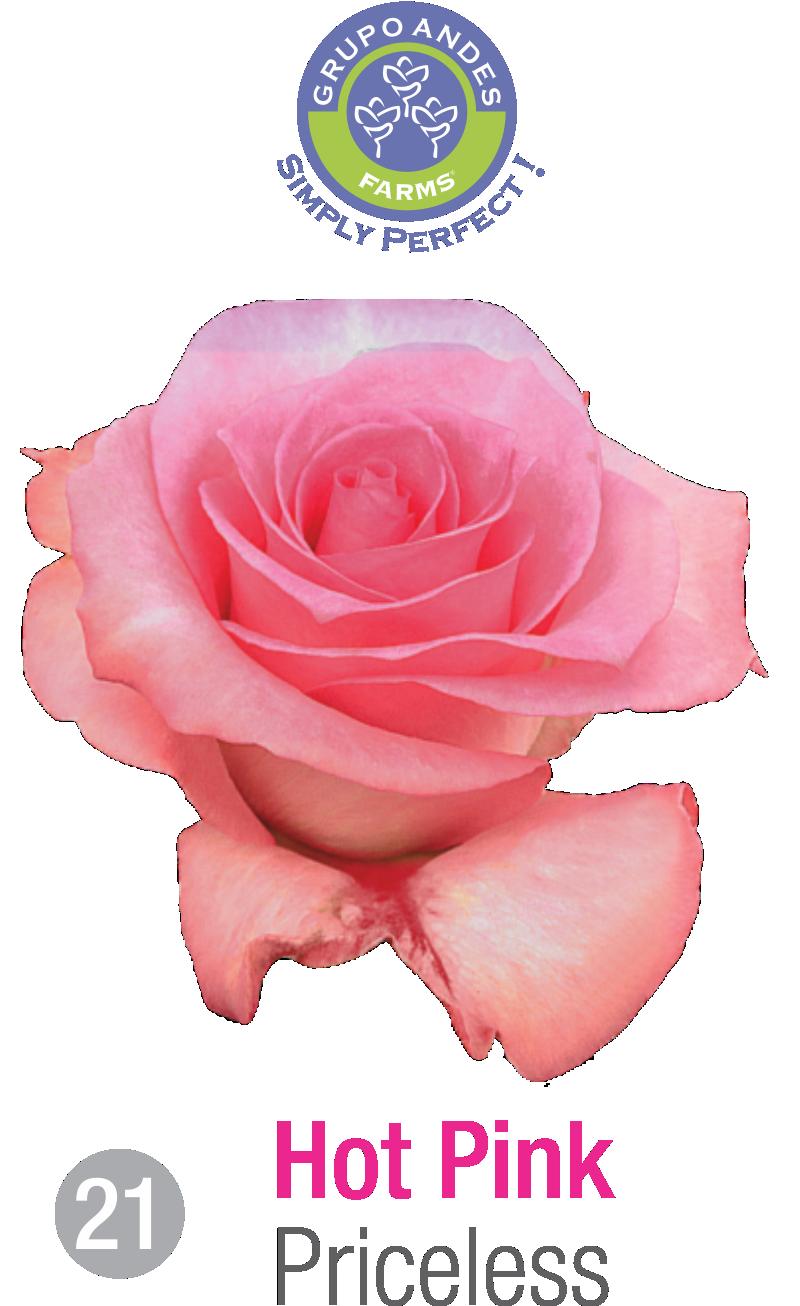 21 - Rosa Variedad Priceless.png