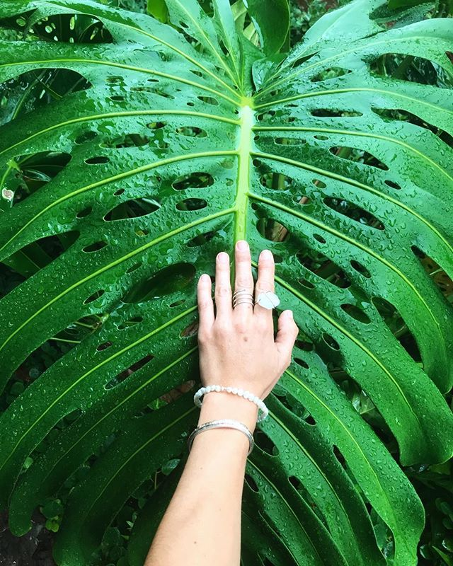 MONSTERA LOVE🌿🌿🌿 Launching a cute new collection just in time for spring with some fun treasures from #kauai!! All @rootssea gems are one of a kind and found by myself💚✨Follow the adventure #rootssea . . . . . #tropical #jewelry #jewelrydesign #jewelrymaker #handmadejewelry #paradise #hawaii #plants #nature #leafy #onelove #planetearth #optoutside #adventure #lifestyle #mermaid #mermaidlife #wirewrap #wirewrappedjewelry #gold #quartz #sterlingsilver #shopsmall #shop #islandlife #supportlocal #californiagirl #wanderlust