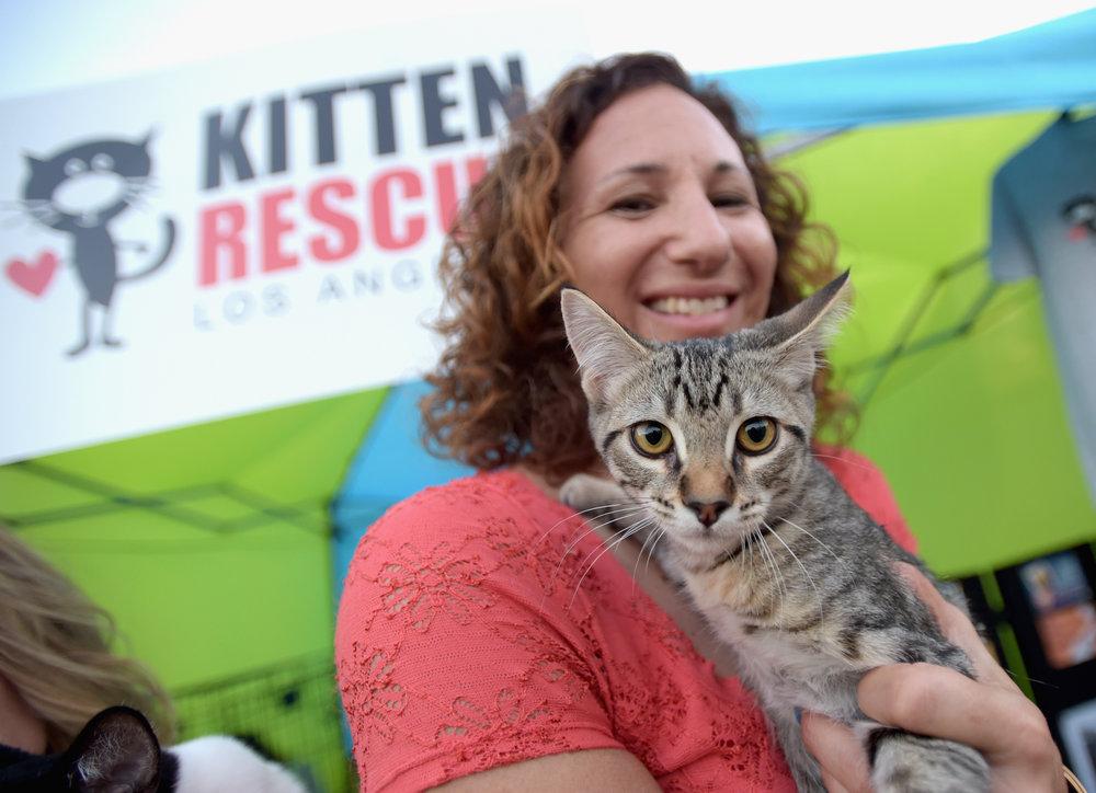 Kitten Rescue (1).jpg