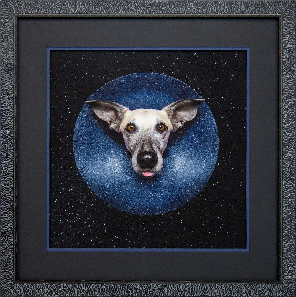 Elk Vogelsang - Scout the Moon Dog.jpg