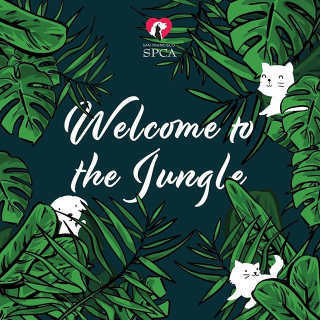 The day is finally here! Today is the opening day of the PopUp Event hosted with @sanfranciscospca . Come on the enchanted jungle for a cuddle session with adoptable pups and kittens! Check out our Art of the Jungle Art Gallery done by our talented artists. It'll run until Feb 14th, don't miss out on this if you're in the San Francisco area.  #adoption #animaladoption #animalwellness #animalrecovery #coneofshame #rescuesofinstagram #furmomma #adoptdontshop #petsofinstagram #dogsofinstagram #catsofinstagram #dogs #cats #dogstagram #catstagram #pets #weeklyfluff #sanfrancisco #sfspca #artgallery #art #artist #artwork #jungle #petadoptions