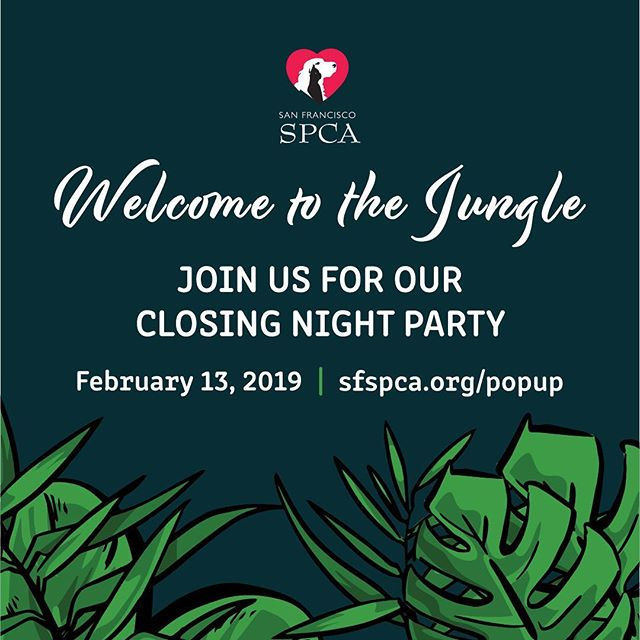 It's less than a week away! Don't miss out on the closing party with the San Francisco Pop Up! It's your last chance to bid on stunning artwork done by talented artists. Get your tickets now! Link is in the bio.