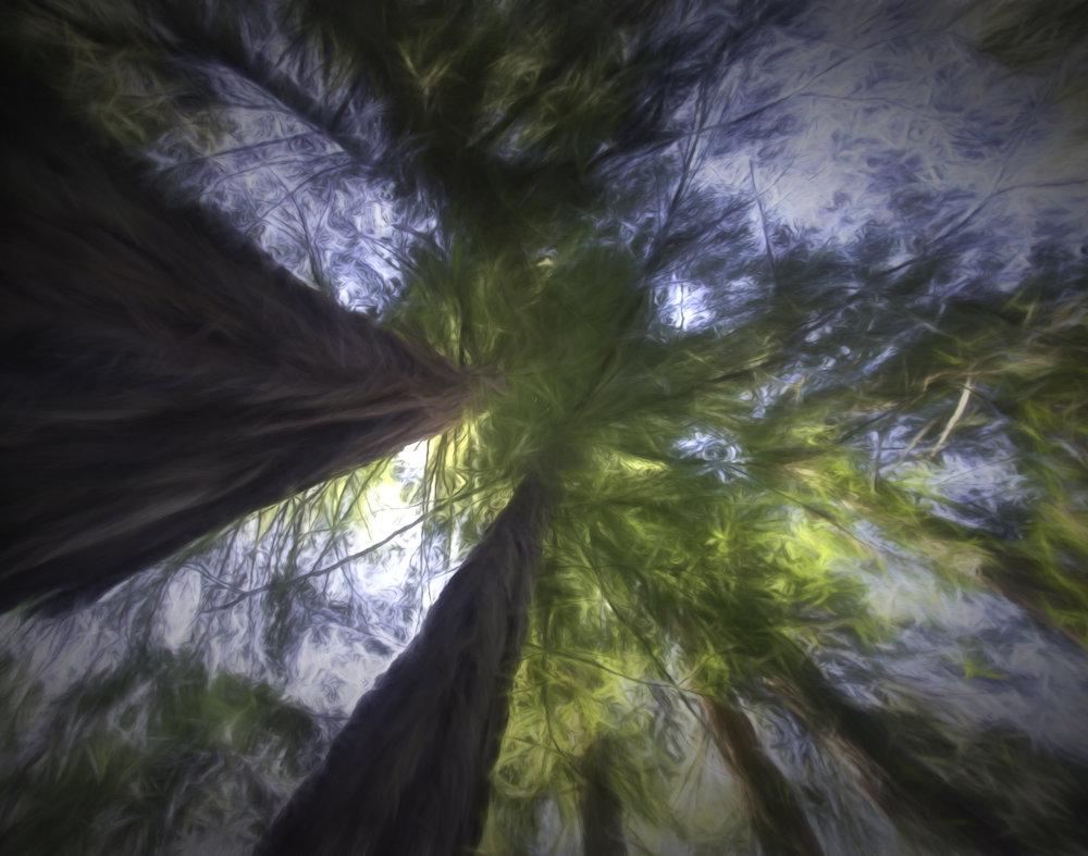 DreamsofTrees.jpg