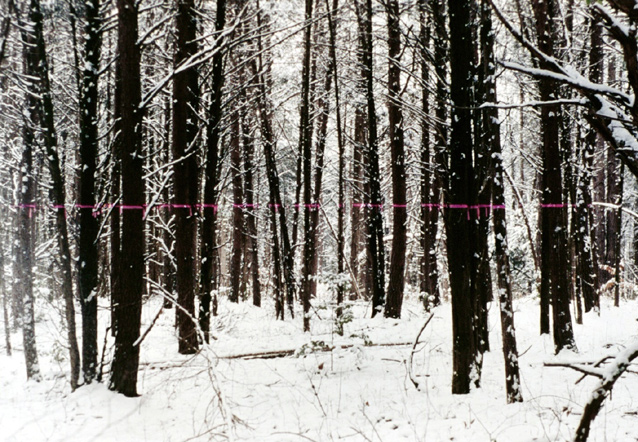 01_wk_wooded_fr_snow.jpg