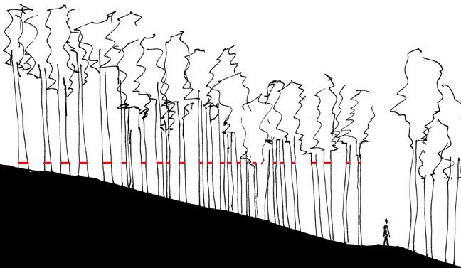 06_wooded_fr_sect.jpg
