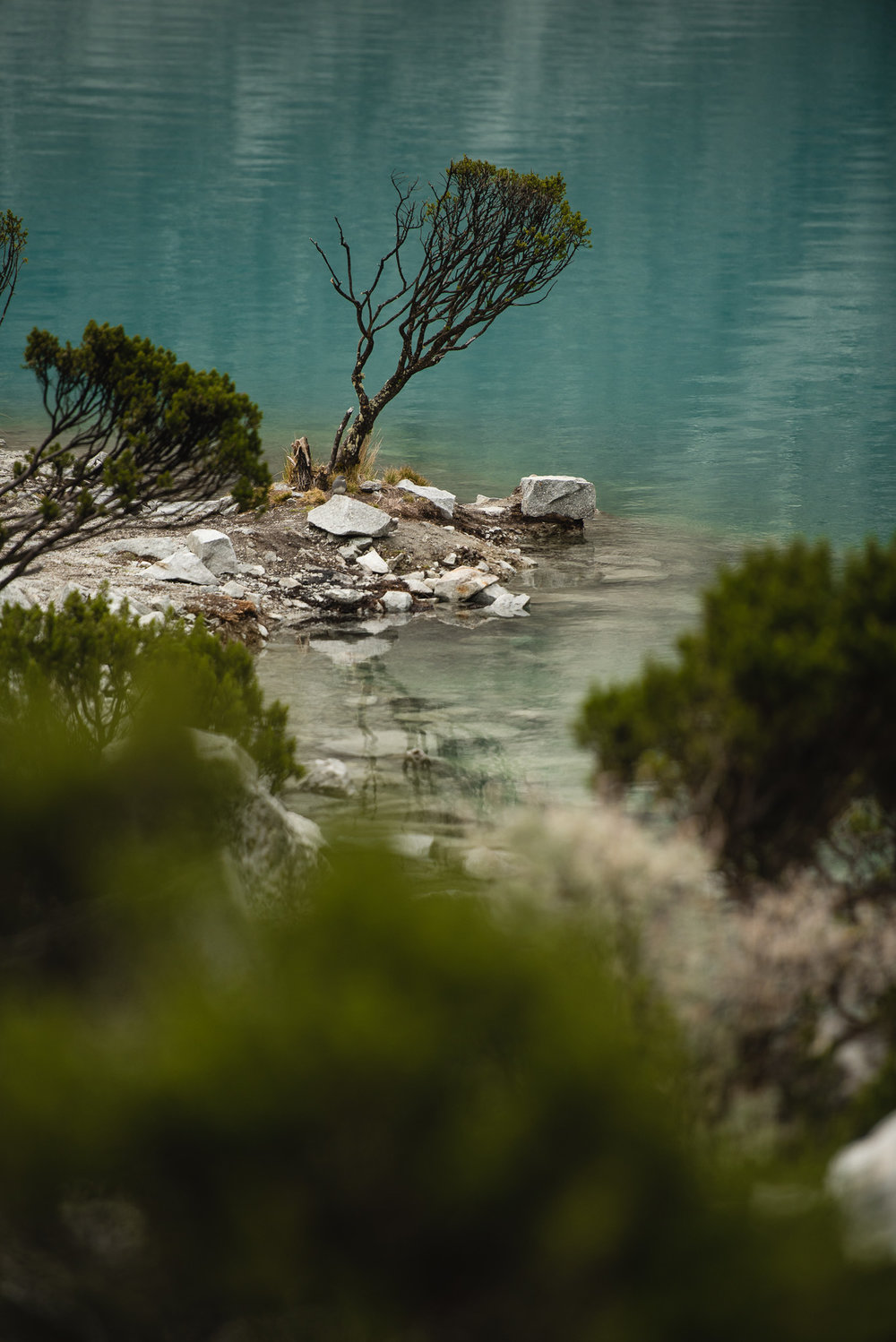 plants in a turquoise lake