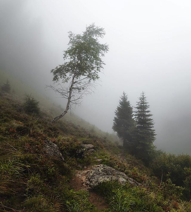 Yesterday we arrived in the Montafon - a beautiful authentic part of Austria with many natural gems! We were left without sun, but the fog we got in return was more than gorgeous!  ___ #meinmontafon #echterlebt #visitvorarlberg #fog #forest