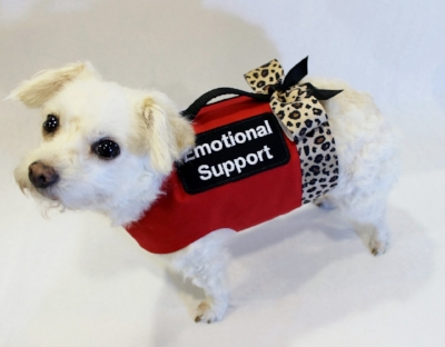 Even if you aren't quite as adorable as this emotional support pup, your support of a loved one will help them navigate their challenging recovery.
