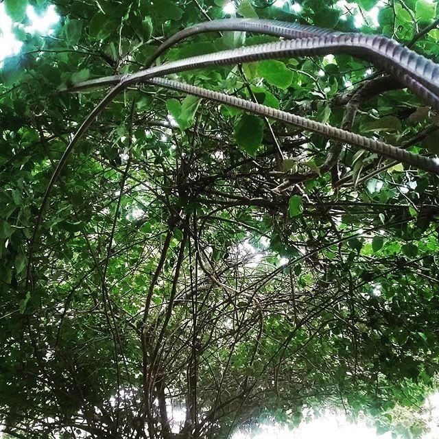 """Reposting @leoceolinestudio:⠀ ...⠀ """"Caramanchão para a primavera do jardim da pousada Estalagem , uma ponte, um altar cultivado no jardim sagrado da nossa amada amiga Heloisa. ⠀ Foi lindo trançar os vergalhões com o galhos para fazer um arco integrado. Uma estrutura escultura quase invisível. ...Esse foi o desafio...⠀ Hoje o espaço segue tão lindo e bem cuidado pelo @brfranco longa vida a Estalagem e seus afetos.⠀ #primaveira #escultura #bouganville #paisagismo #esculturadejardim #leoceolinestudio #fazedores #maker"""" ... #estalagemcamburi #camburi #camburizinho #litoralnorte"""