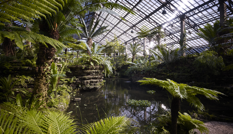 Garfield Park Conservatory Fern Room, 2014. Hedrich Blessing Photographers.
