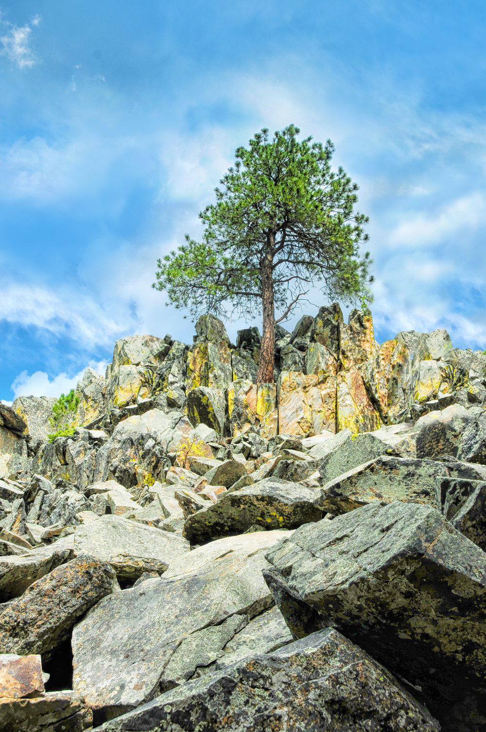 DSC_2712 no side tree.jpg