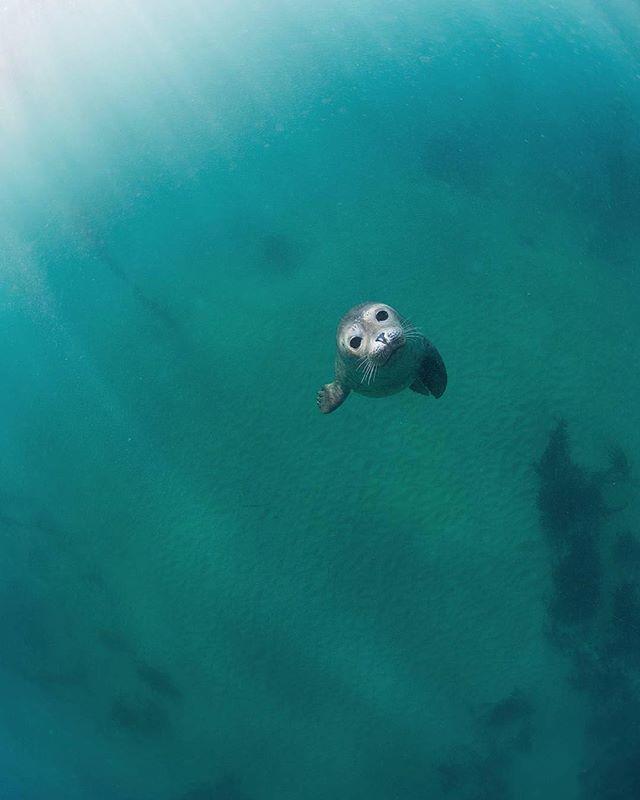 Curious fella! Baby seal says hi! 👋🏽 📸 @sumogurinet #my7gen