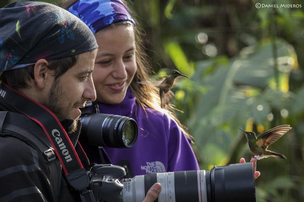 Buff-tailed Coronet.photo by Daniel Mideros, courtesy Bellavista Lodge