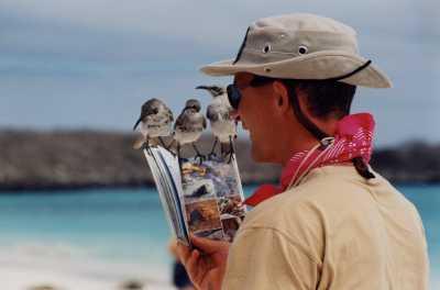 Hood Mockingbirds (endemic), Española Island, by Henry Balingcongam