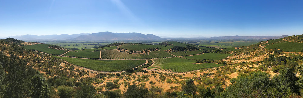 Montgrass Vineyards in the Colchagua Valley