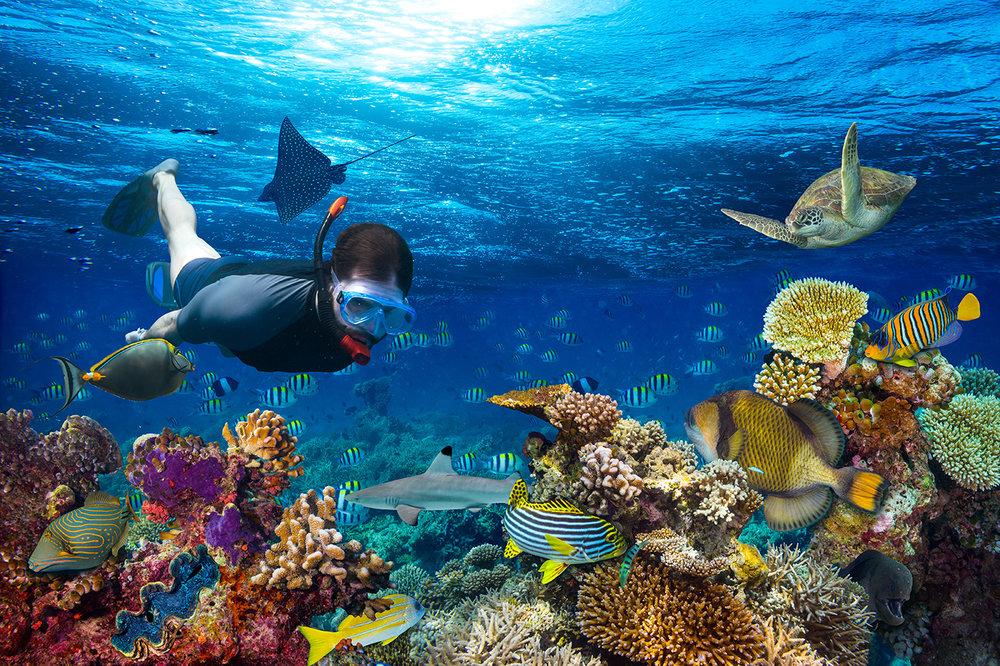 Snorkelling2-2.jpg