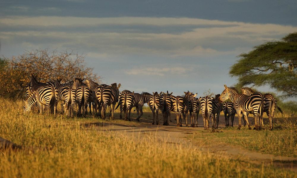 Tanzania18MG-386-Edit.jpg
