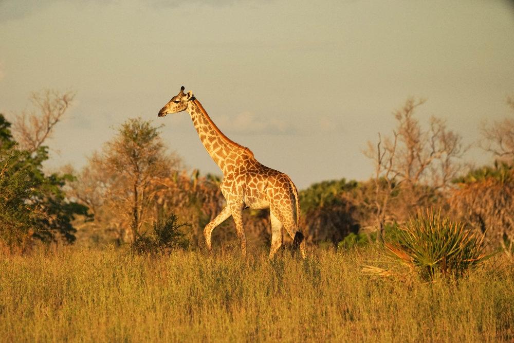 Tanzania18MG-4806-Edit.jpg